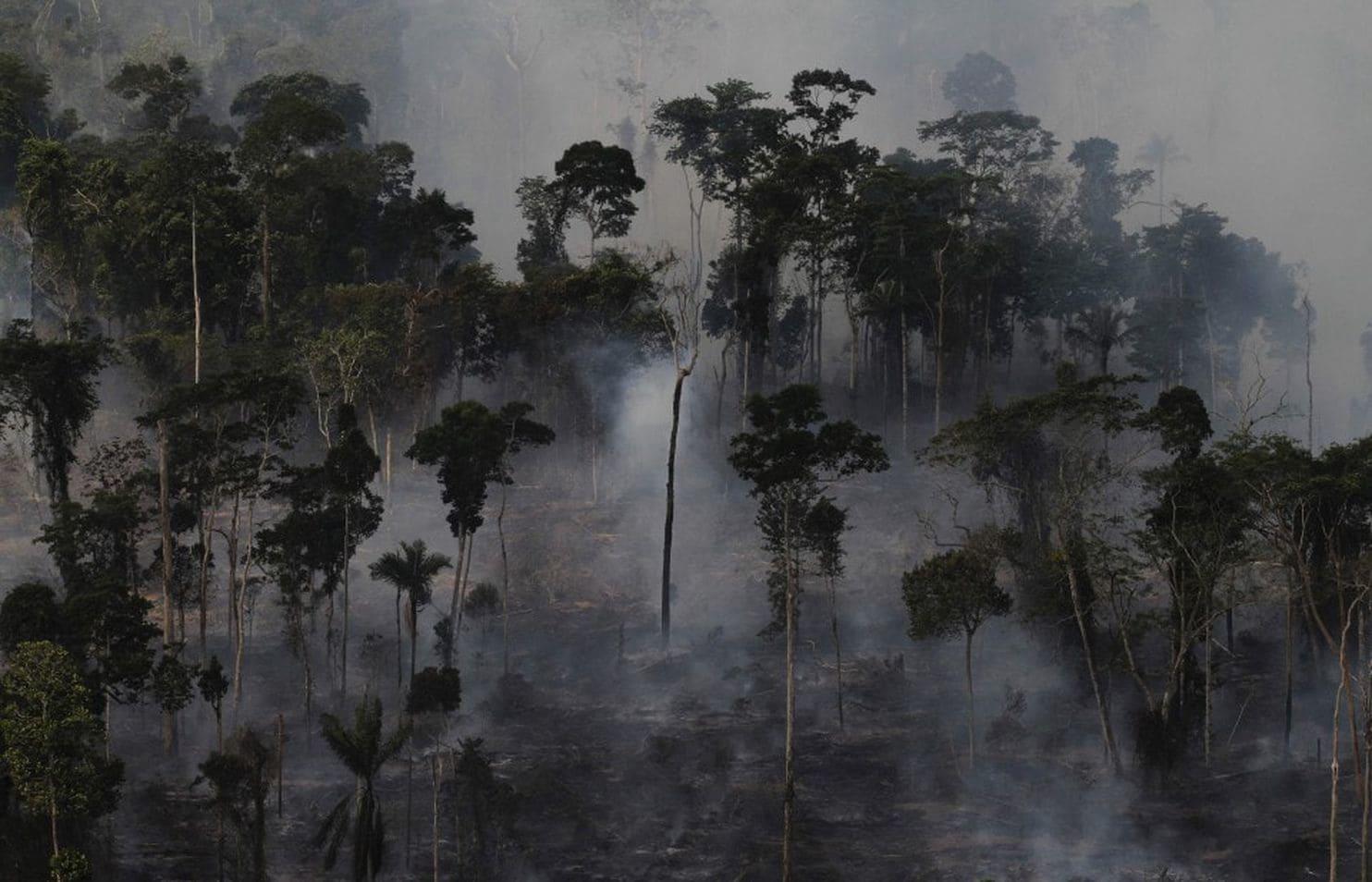 Вырубка тропических лесов Амазонки
