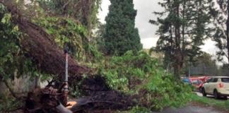 В Италии из-за сильного ветра погибли три человека