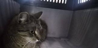 В Киеве дикий кот забежал в магазин посуды и устроил погром