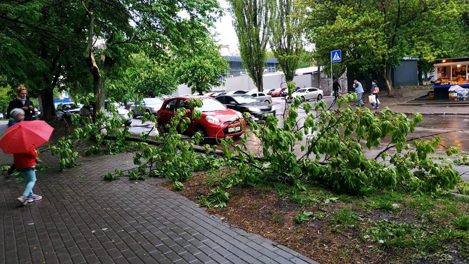 в Киеве упало дерево