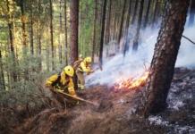 Канари пожежі