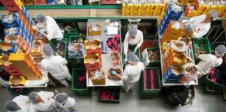 экспорт фруктов из Украины