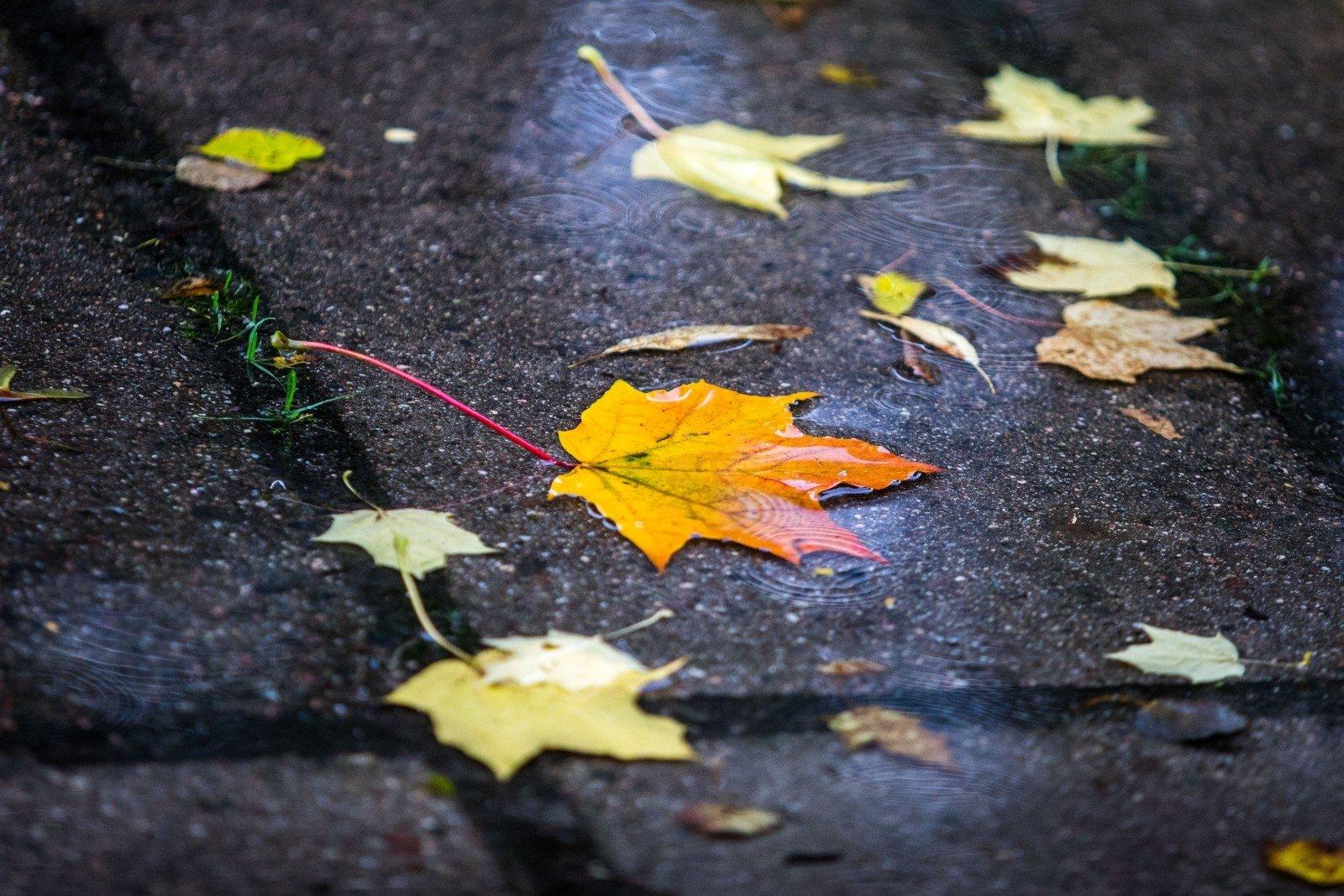 осень дожди