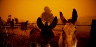 Австралія пожежі