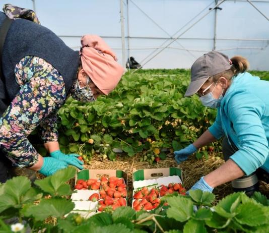 В Чехии предприниматели жалуются на отсутствие заробитчан из Украины (ВИДЕО)