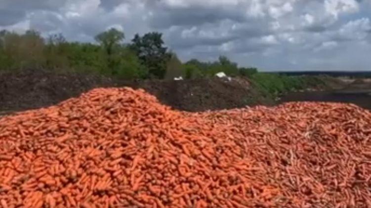 Под Киевом на свалку выбросили тонны моркови, не проданной из-за карантина (ВИДЕО)