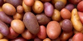 Нидерланды вместо утилизации продали промышленный картофель в Украину