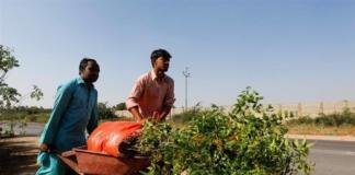 У Пакистані людей, що лишилися без роботи через карантин, найняли саджати дерева