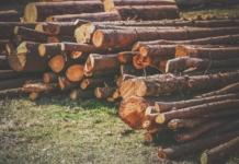 Розкрадання лісу