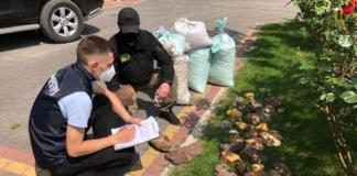 В Ровенской области нашли почти тонну нелегального янтаря, который собирались отправить за границу