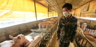 новий штам свинячого грипу