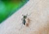 тропічна малярія