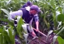 На Ровненщине братья задушили приютившего их мужчину и закопали тело на кукурузном поле