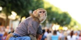 У Києві рекомендують штрафувати за використання тварин для фото за гроші