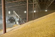 зерно в элеваторе