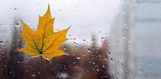 погода 15 листопада