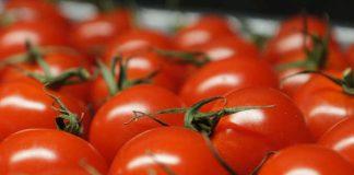 імпортні томати