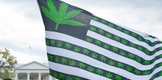 в двух штатах США легализовали марихуану