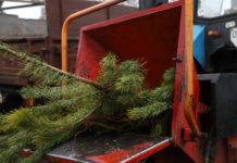 В Киеве в прошлом году утилизировали лишь 2% от купленных елок. Экологи предупреждают об угрозе