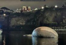 В Италии обнаружили гигантскую тушу кита