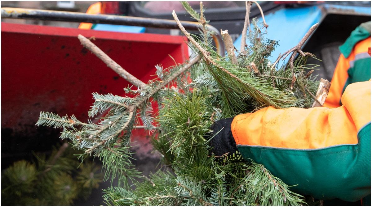 В КГГА рассказали, как используют отданные киевлянами на утилизацию елки