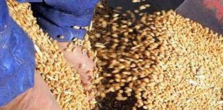 імпорт пшениці