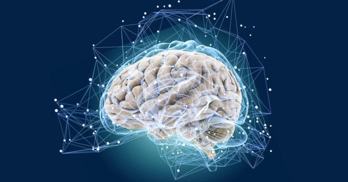 Альцгеймер мозг память